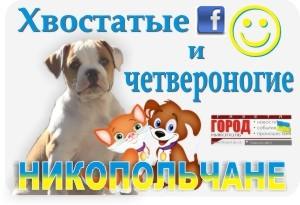 """Приглашаем всех любителей животных в группу """" Хвостатые и четвероногие, Никопольчане """" (facebook)"""